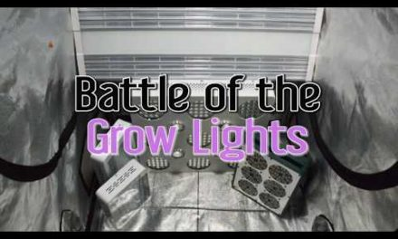 Growing Indoors with LEDs