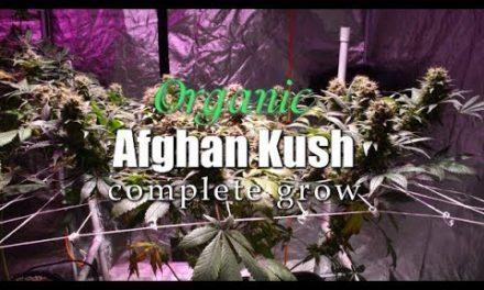 COMPLETE ORGANIC AFGHAN KUSH GROW – CANNABIS