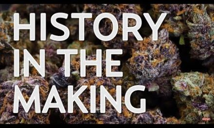 History in the Making At The Cannabis Cup
