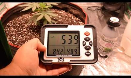 Co2 In Home Grows