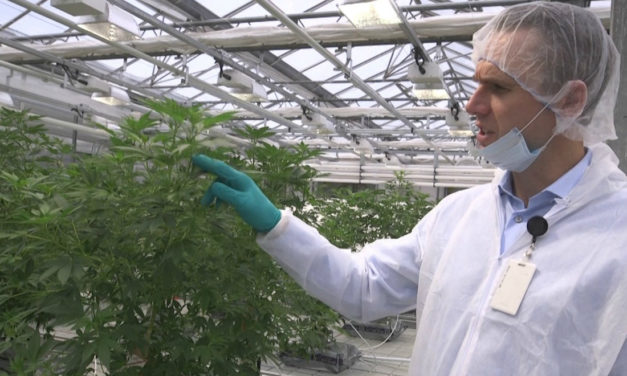 The Marijuana Producer Aurora Cannabis Is Surging After Its Partner Received a License That Helps It Get Better Quality CBD (ACB)