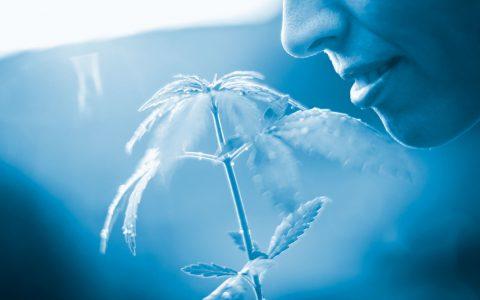 Grow Your Greatest: Tips & Tricks for Massachusetts Cannabis Growers