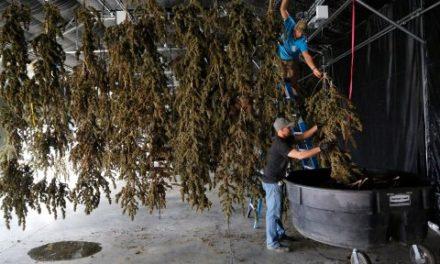Portland's $6 Eighth-Ounces Are the Future of Cannabis