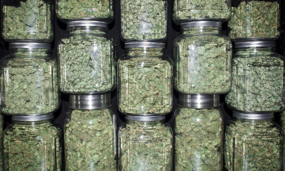 Border Patrol Seizes $100,000 Worth of Cannabis in Upstate New York