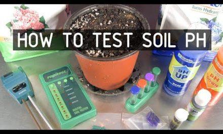 How to Test & Adjust Soil PH for Growing Cannabis Plants ( Seeds, Soil & Sun: Season 2 Ep 2)