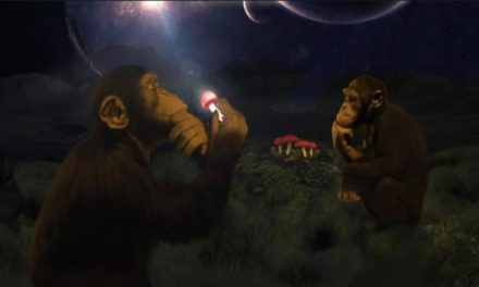 """WTF Is the """"Stoned Ape Theory""""?"""