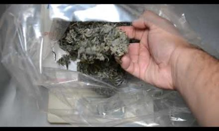 Cannabis Dry sifting Documentary