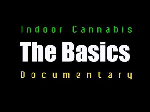 Inddor Cannabis Grow room- The Basics