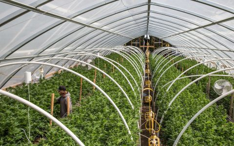 CannTrust Halts Sales as Health Canada Investigation Expands