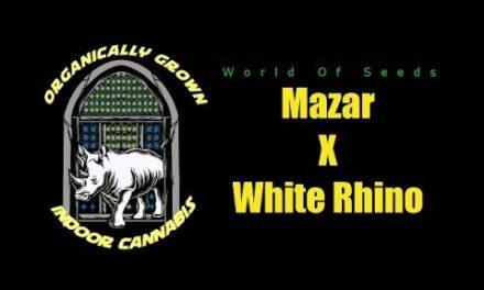 INDOOR ORGANIC GROW DOCUMENTRY – MAZAR X WHITE RHINO