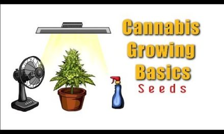 I Germinated Cannabis Seeds