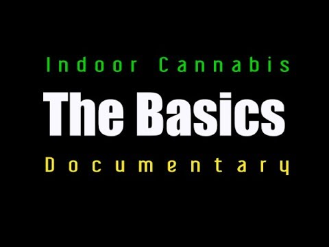 Indoor cannabis Soil – The Basis
