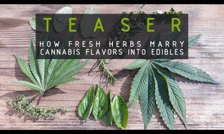 TEASER How Herbs Marry Cannabis Flavors Into Edibles (RUFFHOUSE EXCLUSIVE)