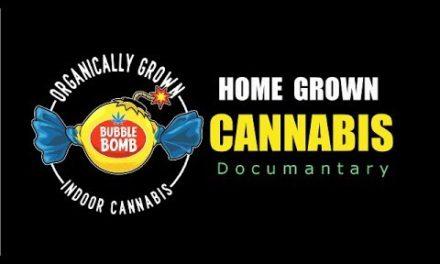 Home Grown Cannabis Documentary