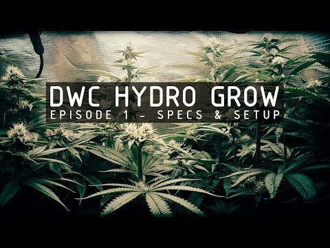 DWC Hydroponic Cannabis Grow Ep 1. System Specs & Setup